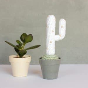 Cactus du désert