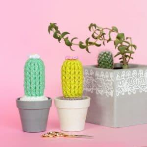 Grand cactus fleuri