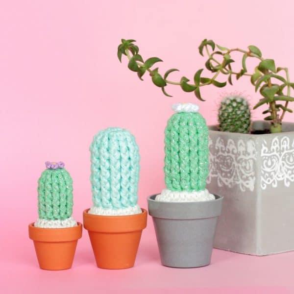 patron cactus