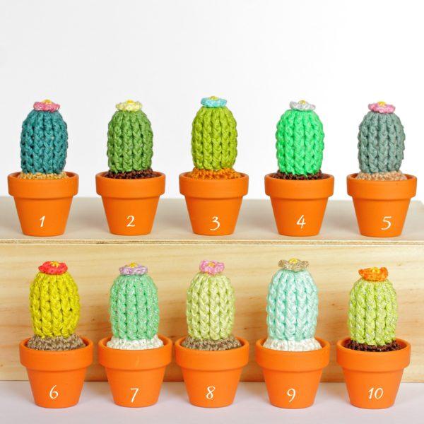 Petits cactus fleuris