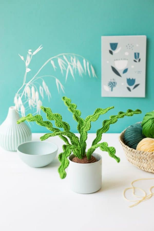 succulente au crochet